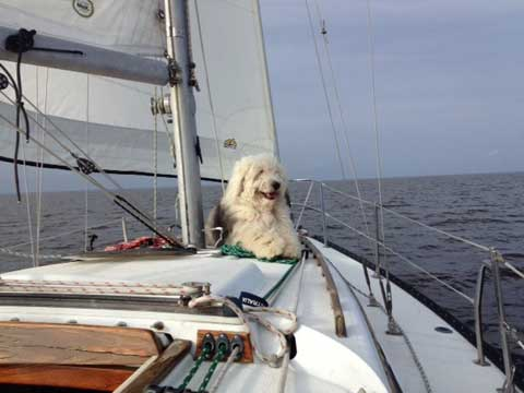 Islander 28, 1979, Port Arthur, Texas, sailboat for sale ...